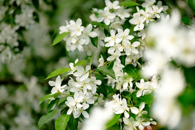 Fiori della primavera nel primo piano del giardino