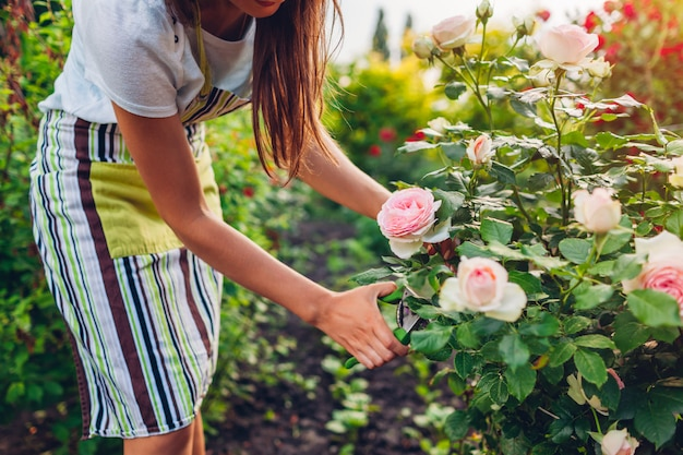 Fiori della riunione della giovane donna in giardino. giardiniere tagliando le rose con il potatore.