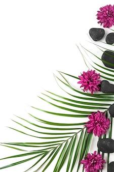 Fiori di aster; pietra spa nera e foglia di palma su sfondo bianco