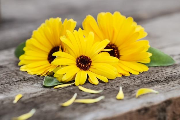 Fiori di calendula gialla (calendula officinalis)