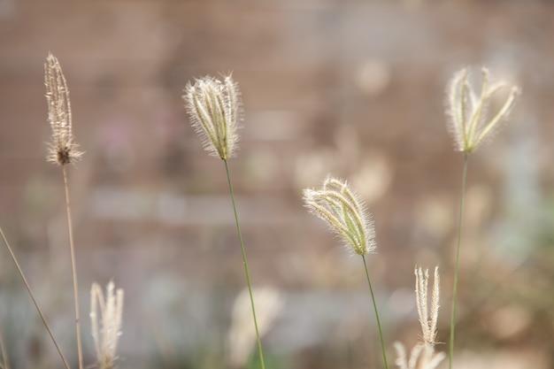 Fiori di erba e luce solare