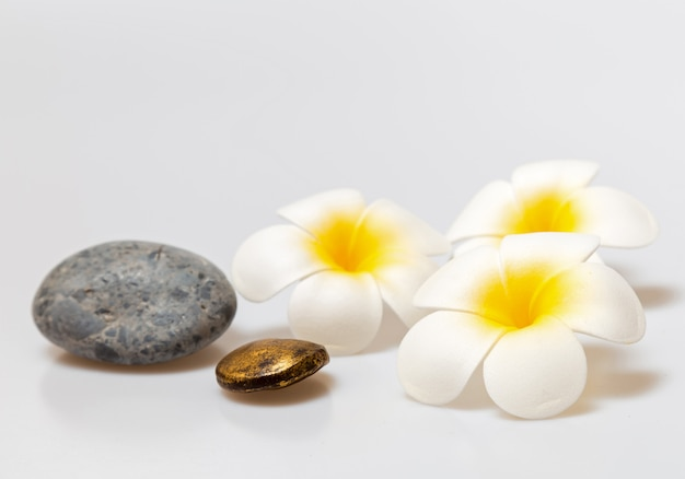 Fiori di frangipane su sfondo bianco. concetto per sfondo spa