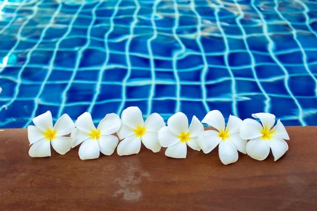 Fiori di frangipani galleggianti in piscina