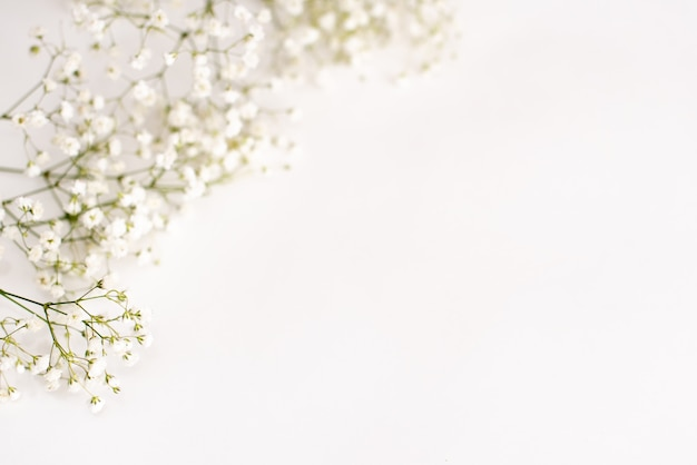 Fiori di gypsophila su sfondo bianco. sfondo delicato per le carte
