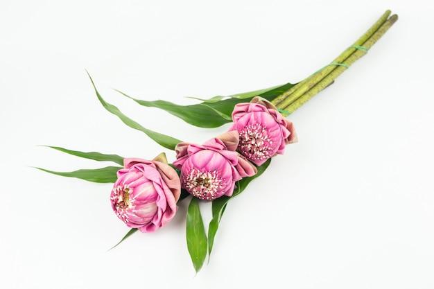 Fiori di loto rosa per paga rispetto al buddha isolato su bianco