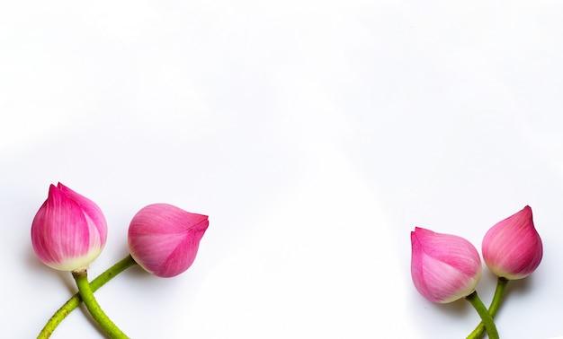 Fiori di loto su bianco. copia spazio