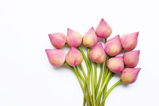 Fiori di loto su bianco.