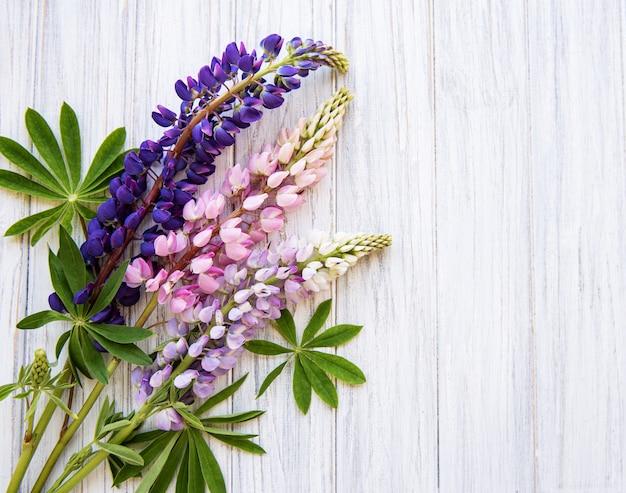 Fiori di lupino rosa e viola