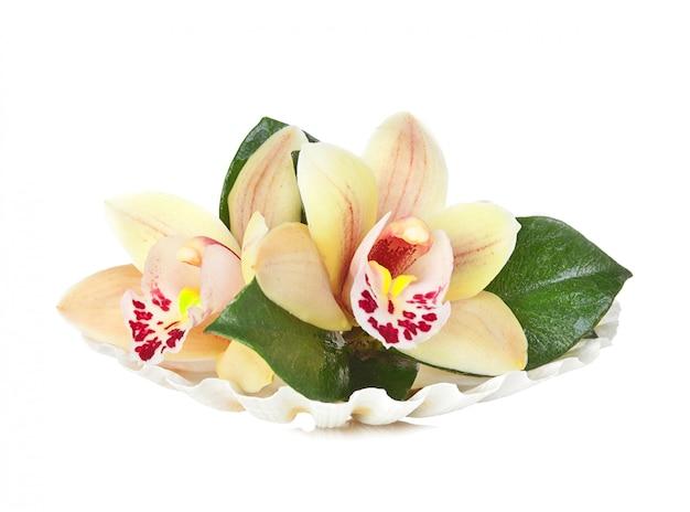 Fiori di orchidea nella conchiglia