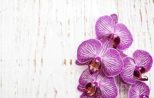 Fiori di orchidee