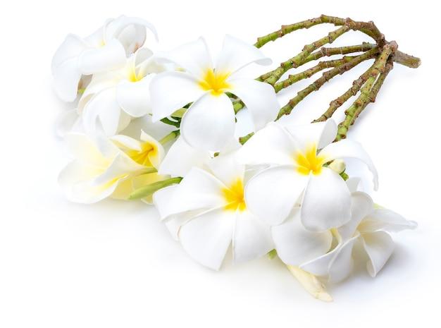 Fiori di plumeria morbidamente bianchi isolati su sfondo bianco, fiore di frangipani isolato sfondo bianco.