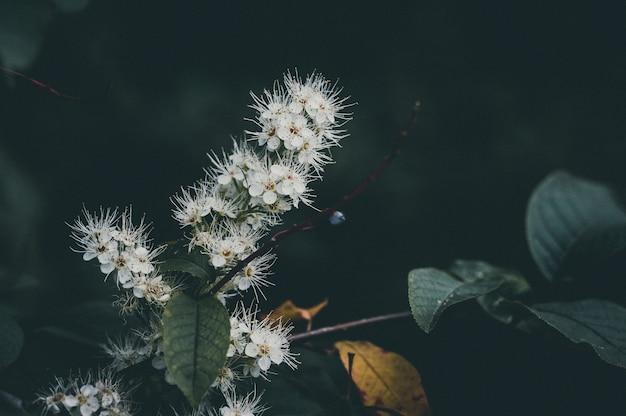 Fiori di primavera in fiore