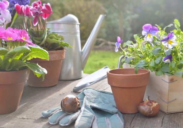 Fiori di primavera in vaso e accessori da giardinaggio