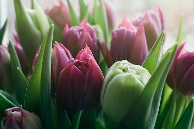 Fiori di primavera rosa sfocati