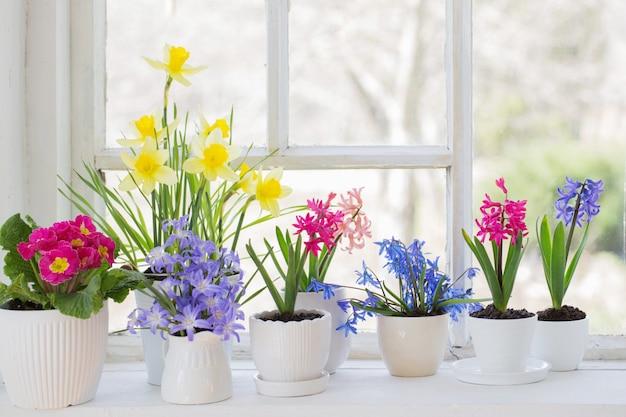 Fiori di primavera sul davanzale