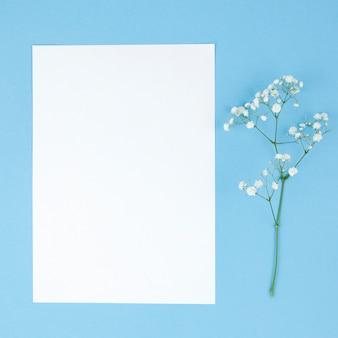 Fiori di respiro del bambino e carta bianca vuota su sfondo turchese