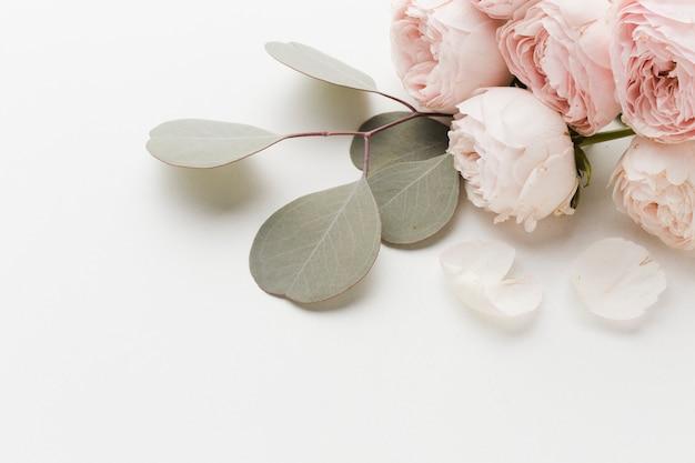 Fiori di rosa con alta vista di disposizione delle foglie