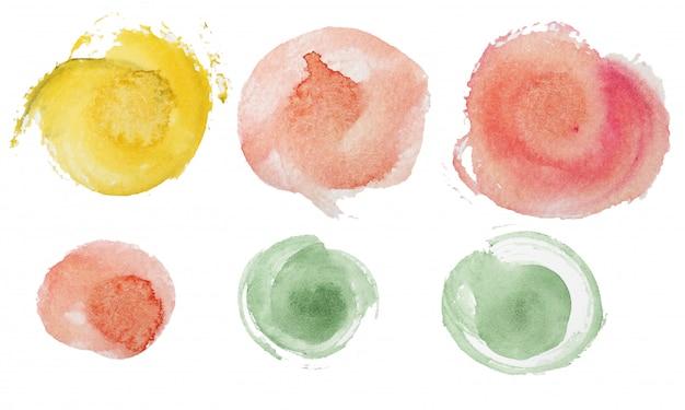 Fiori di rosa dell'acquerello
