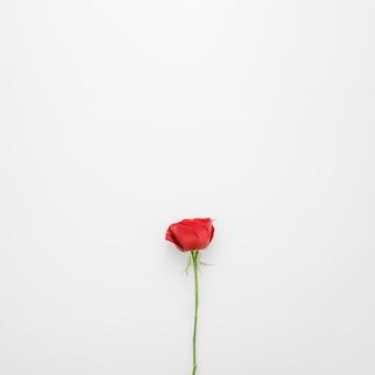 Fiori di rose rosse