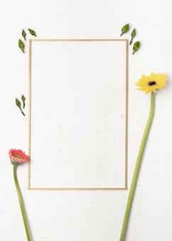 Fiori di tarassaco con una cornice semplicistica su sfondo bianco