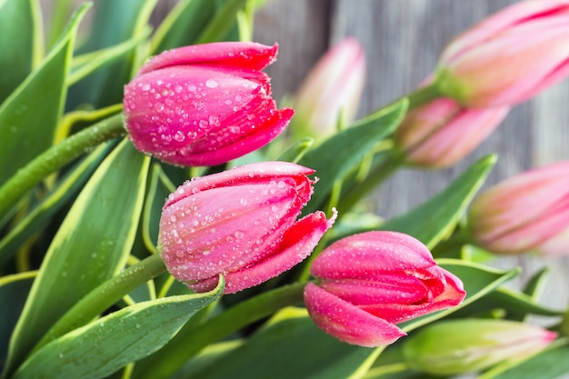 Fiori di tulipano con gocce d'acqua. primo piano, messa a fuoco selettiva