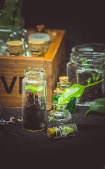 Fiori e estratti di piante in piccole bottiglie