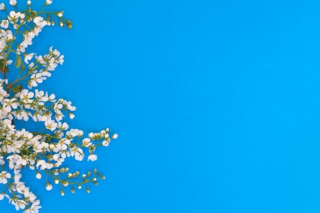 Fiori e foglie della ciliegia di uccello su una priorità bassa blu.