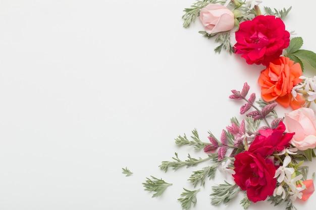 Fiori e foglie di rosa su fondo bianco