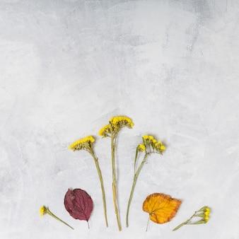 Fiori e foglie