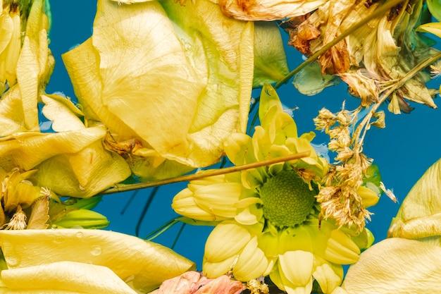 Fiori e petali gialli piani di disposizione in primo piano dell'acqua