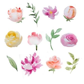 Fiori e pianta dipinti a mano dell'acquerello isolati. illustrazione di fiori