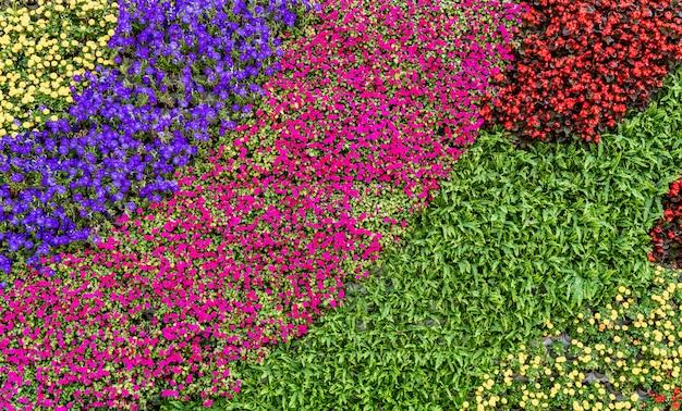 Fiori e piante sullo sfondo della parete