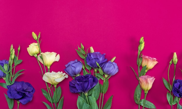 Fiori freschi di fioritura eustoma lisianthus