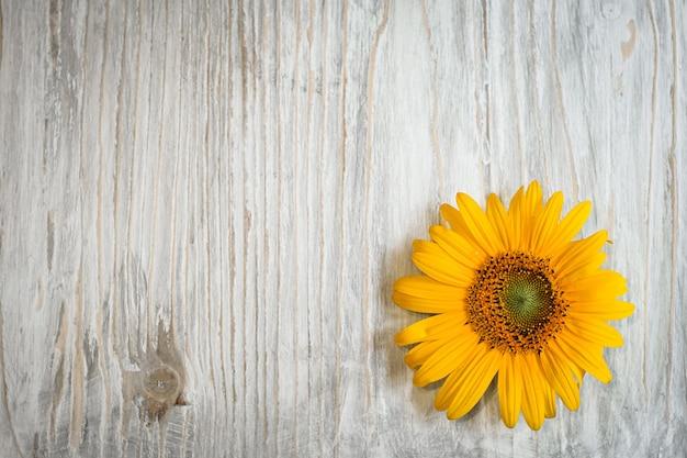 Fiori gialli del girasole su un fondo di legno bianco