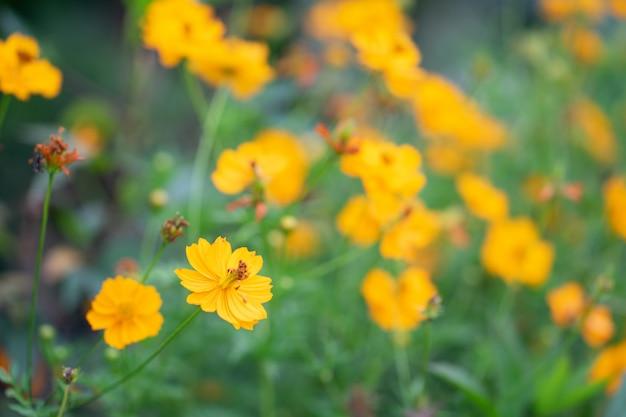 Fiori gialli in giardino