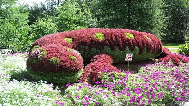 Fiori giardino pianta salamandra