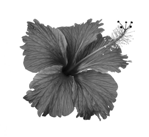 Fiori in bianco e nero isolati su spazio bianco