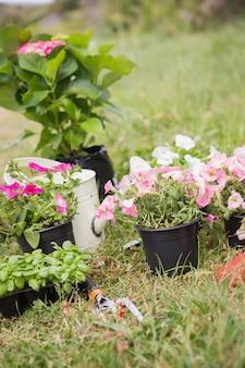 Fiori in vaso pronti per essere piantati