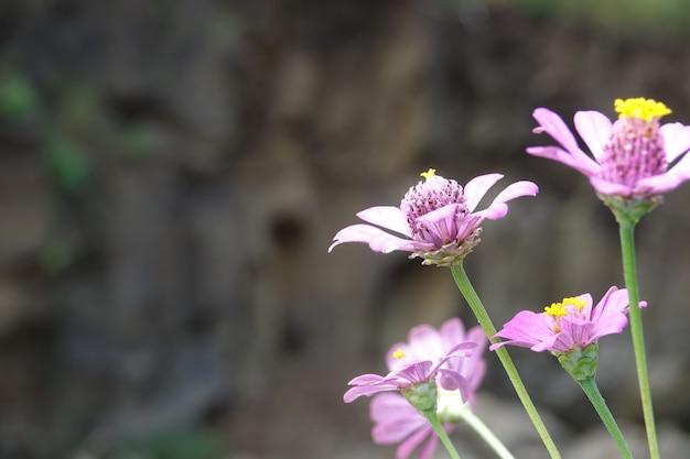 Fiori lilla con sfondo sfocato