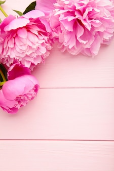 Fiori porpora della peonia su fondo di legno rosa.