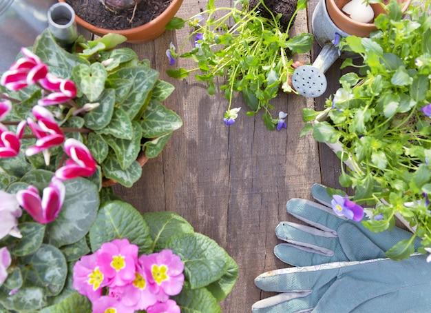 Fiori primaverili in vaso e attrezzature da giardinaggio