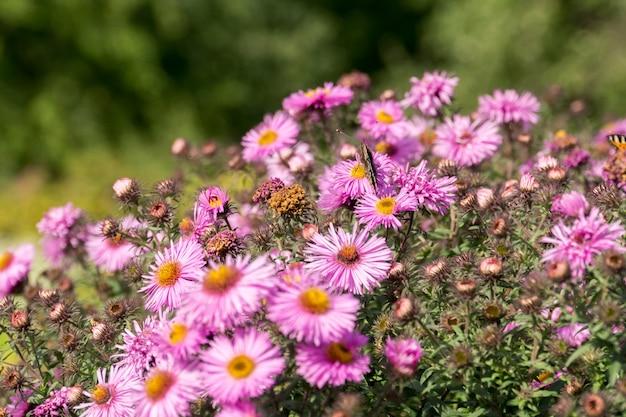 Fiori rosa con farfalla