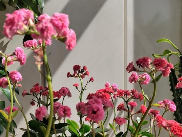 Fiori rosa con le foglie verdi, sfuocatura del fondo del fuoco selettivo