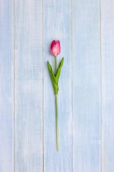 Fiori rosa del tulipano sulla tavola di legno blu.