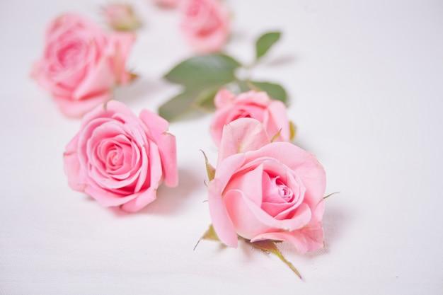 Fiori rosa delle rose di colore sui precedenti bianchi. copia spazio.