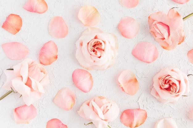 Fiori rosa delle rose su calcestruzzo bianco