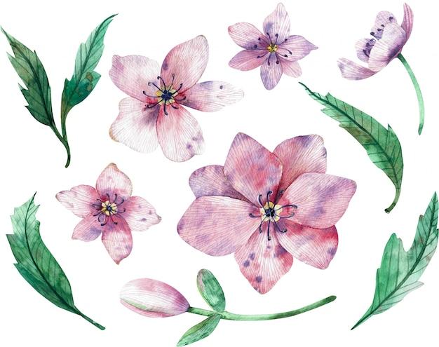 Fiori rosa di natale isolati su priorità bassa bianca