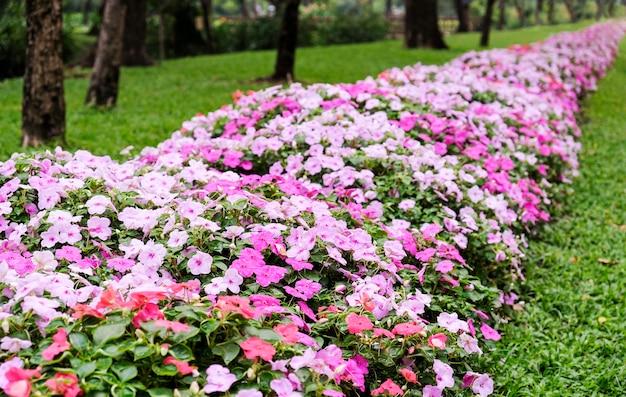Fiori rosa in giardino