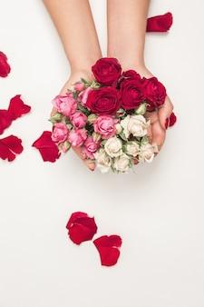 Fiori rose nelle mani della ragazza, vista dall'alto, piccole rose bianche rosa rosse, petali di rose rosse
