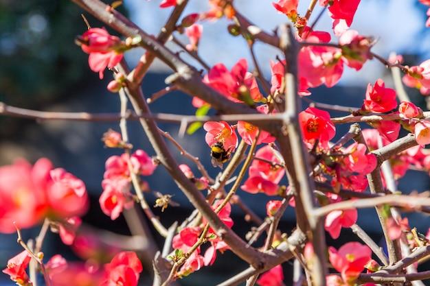 Fiori rossi luminosi sulla pianta del ramo